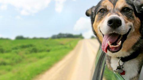 """Sequestro animali: """"cosa pertinente al reato"""""""