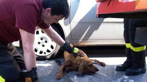 Incidente fra auto e cane randagio: chi risarcisce i danni?
