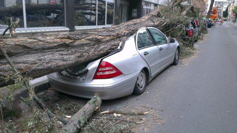 Segnalazione di albero pericolante: chi ha l'obbligo di intervento?